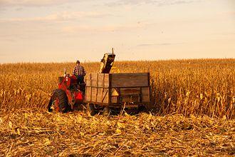 Corn production in the United States - Iowa corn picker (2011)