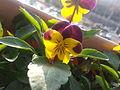 I dont name of flower3.jpg