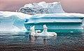Icebergs (15662101740).jpg