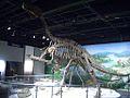 Iguanodon skeleton.JPG