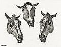 Illustration by Jean Bernard, digitally enhanced by rawpixel-com 191.jpg