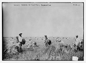Fort Peck Indian Reservation - Fort Peck Indian Reservation in 1917 harvesting oats