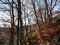 Invierno 2011 en Tejera negra - panoramio (17).jpg