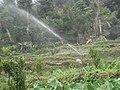Irrigating plants at Kaski.JPG