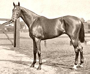 Isinglass (horse) - Isinglass in training