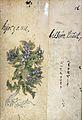 Japanese Herbal, 17th century Wellcome L0030083.jpg