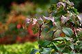 Jardin Japonais, Toulouse (8103283305).jpg