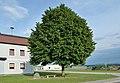 Josef Fink Linde 01, St. Georgen am Ybbsfelde.jpg