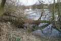 Jumble of branches - geograph.org.uk - 1173131.jpg