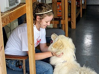 Kansas Academy of Mathematics and Science - A KAMS student volunteering at the local Humane Society.