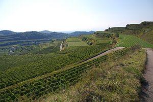 Baden (wine region) - Terraced vineyards in Kaiserstuhl, a district of the Baden region.