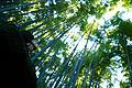 Kamakura photowalk 2012 - Bamboo monster (8174096289).jpg