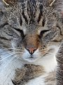 Kat - Katze - Cat - Chat - panoramio - Hänsel und Gretel (8).jpg