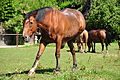 Katzensee - Gut Katzensee 2010-08-01 15-53-06.JPG