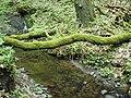 Kavinský potok (7).jpg