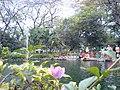 Kebun bibit - panoramio (2).jpg