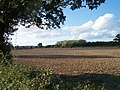 Kedges Wood - geograph.org.uk - 58552.jpg