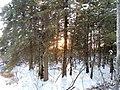 Kerry Wood Nature Conservatory (32599570590).jpg