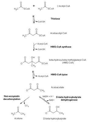Cuerpo cetónico