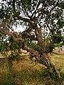 Khajuraho 81 2015in03kjrh 137 (38712377060).jpg