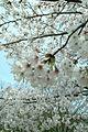 Koishikawa kourakuen 1.jpg