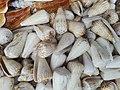 Kori, cox's bazar.jpg