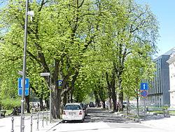 Kostanjev drevored.JPG