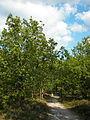 Lüneburger Heide 099.jpg