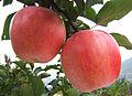 LB Apple M01.jpg