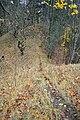 LSG Sudmerberg - Wildwechsel zum Gipfel (2).jpg