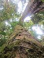 La Amistad Panama Biosphere Reserve - Parque Nacional Volcan Baru (a core zone) 18.JPG