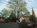 Ladenburg Naturdenkmal Linde evangelische Kirche.JPG