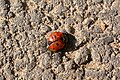 Ladybirds death (2127213225).jpg