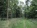 Ladyclose Wood. - geograph.org.uk - 512621.jpg