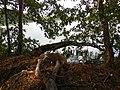 Lake Silach - panoramio (8).jpg