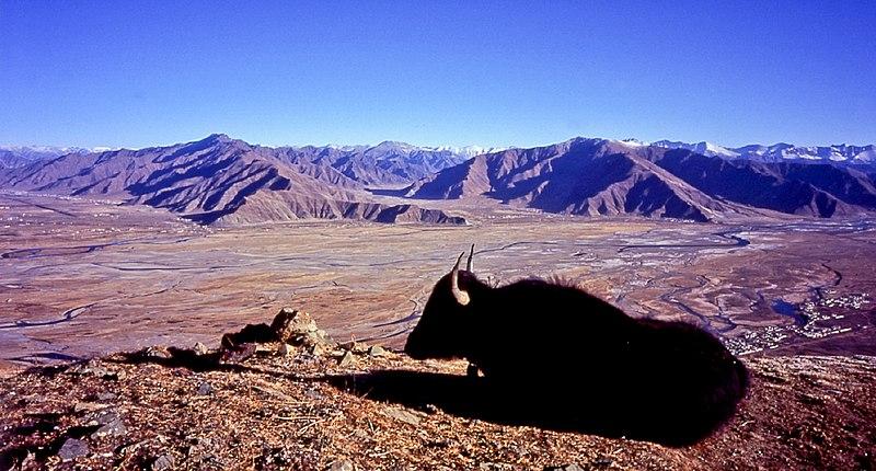 File:Landscape fromGanden withYAK Tibet.jpg