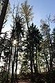 Landschaftschutzgebiet Striegistal (4).jpg