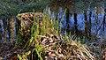 Landschaftsschutzgebiet Oldhorster Moor im Winter 01.jpg