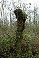 Landschap De Stroopers te Kemzeke - 372105 - onroerenderfgoed.jpg