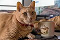 Larry the cat lying on a desk next to a coffee mug (DSC 0055).jpg
