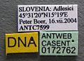 Lasius emarginatus casent0172762 label 1.jpg