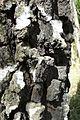 Lasy okolice Miaczynka (8).JPG