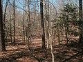 Late March woods, site of Lexington plantation.jpg