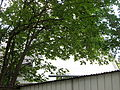 Laufamholzstraße 201 Einfamilienhaus D-5-64-000-2396 2015-05-06 18.21.47.jpg
