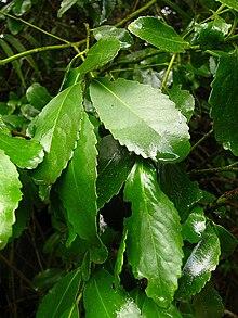 Chilena en el bosque - 5 4