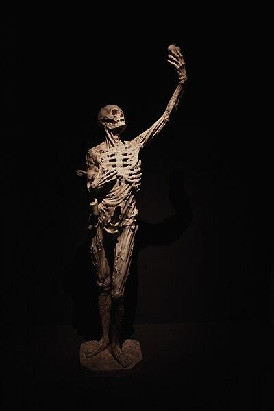 """Statue du tombeau de René de Chalon, le """"Squelette"""", attribué à  Ligier Richier, vers 1550, Centre Pompidou, Metz, France."""