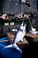 Le marché aux poissons de Catane (7).jpg