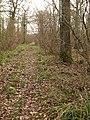 Leigholt Wood - geograph.org.uk - 1769265.jpg