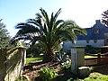 Les palmiers de brehat - panoramio.jpg
