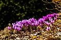 Li.F.E. (Little Fuchsia Equanimity).jpg